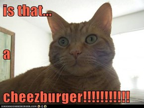 is that... a cheezburger!!!!!!!!!!!