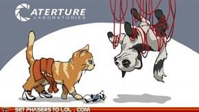 """""""Portal"""" Cats"""