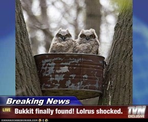 Breaking News -  Bukkit finally found! Lolrus shocked.