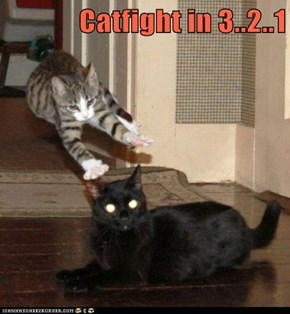 Catfight in 3..2..1