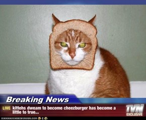 Breaking News - kittehs dweam to become cheezburger has become a little to true...
