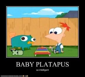 BABY PLATAPUS