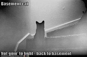 Basement cat  Not goin' to light - back to basement