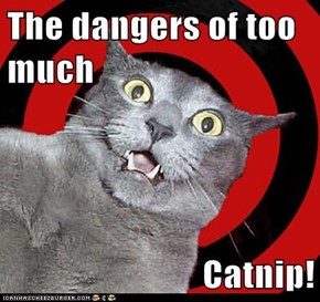 The dangers of too much  Catnip!