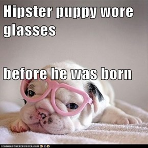Hipster puppy wore glasses before he was born