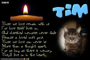 A Monday Night Candle For All Our FurFriends At The Bridge, And For All Those In Need