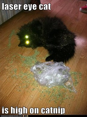 laser eye cat   is high on catnip