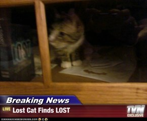 Breaking News - Lost Cat Finds LOST