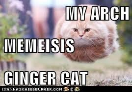 MY ARCH  MEMEISIS GINGER CAT