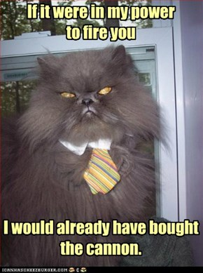 middle-management cat is literal