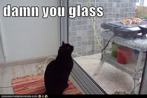 damn you glass