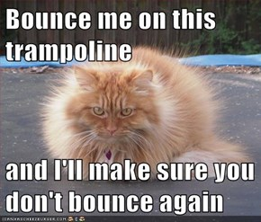 Bounce me on this trampoline  and I'll make sure you don't bounce again
