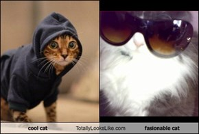 cool cat Totally Looks Like fasionable cat