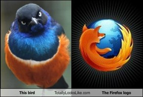 This Bird Totally Looks Like The Firefox Logo