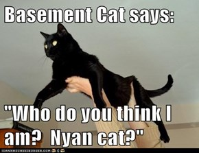 "Basement Cat says:  ""Who do you think I am?  Nyan cat?"""