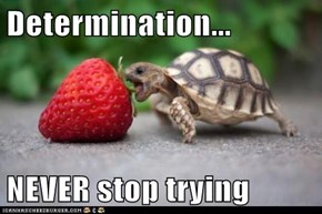 Determination...  NEVER stop trying