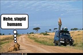 Hehe, stupid humans