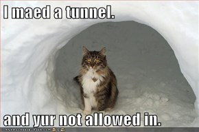 I maed a tunnel.  and yur not allowed in.