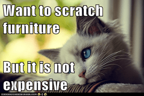 Meme Animals: First World Cat Problems - Shredding Your Goodwill Finds Just Doesn't Do It for Me