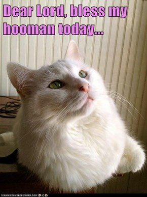 Dear Lord, bless my hooman today...