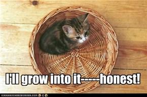 I'll grow into it
