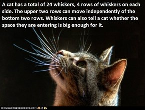 Fun Cat Facts #28