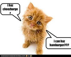 i can haz hamburger???=3