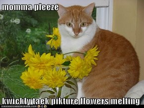 momma pleeze  kwickly taek pikture flowers melting