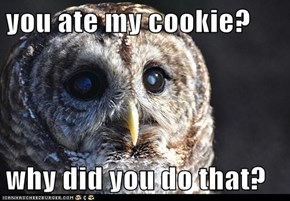 you ate my cookie?  why did you do that?