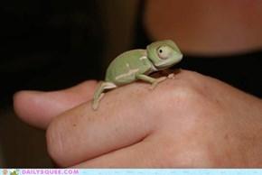 Squee Spree: Lizard Week!