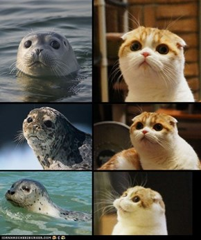 This Kitteh Totally Looks Like a Seal