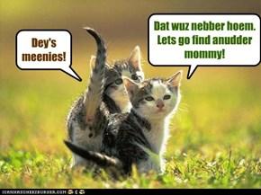 We muss taek kare ov da babycats!