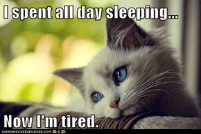 Meme Animals: First World Cat Problems - Sleep the Pain Away