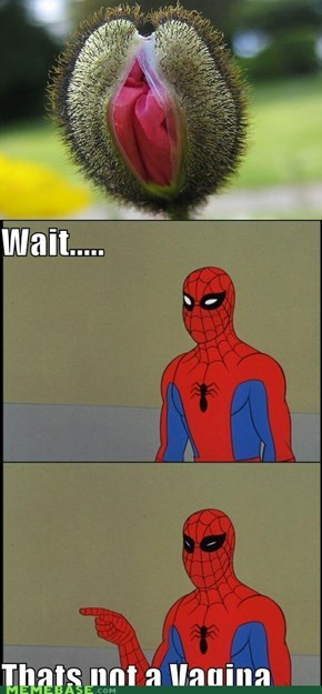 Close Enough, Spidey