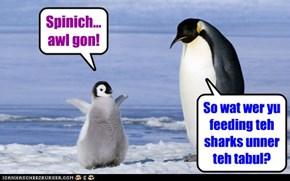 Wut sharks?