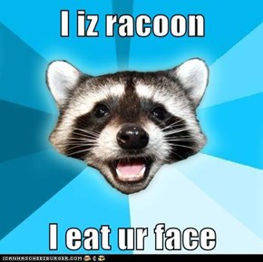 I iz racoon  I eat ur face