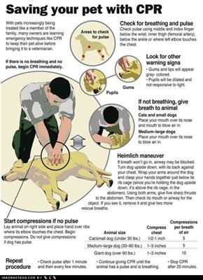 I Has A Hotdog: Goggie CPR