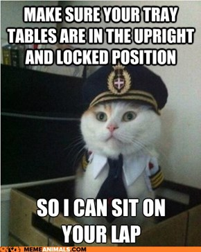 Captain Kitteh: BUT WHO'S FLYING THE PLANE???