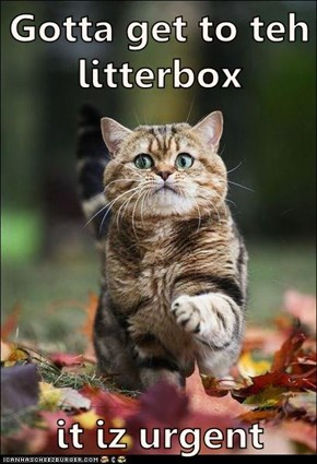 Gotta get to teh litterbox  it iz urgent