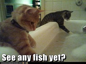 See any fish yet?