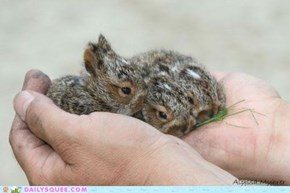 Daily Squee: Pocket Nibble Buns
