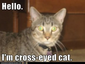 Hello.  I'm cross-eyed cat.