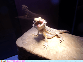 Reader Squees: Silly Basking Faces