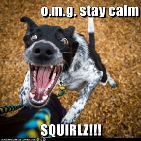 o.m.g. stay calm  SQUIRLZ!!!