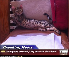Breaking News - Catnappers arrested, kitty porn site shut down.