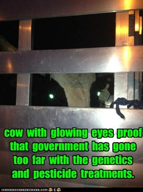 cow  with  glowing  eyes  proof  that  government  has  gone  too  far  with  the  genetics  and  pesticide  treatments.
