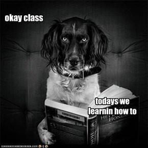 KKPS pouncin classes