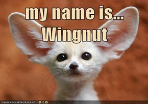 my name is... Wingnut