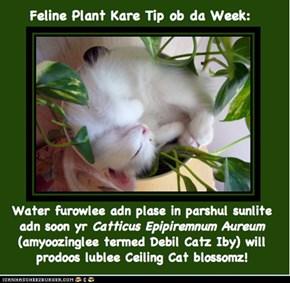 Feline Plant Kare Tip ob da Week