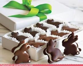 Epicute: Bunny S'mores